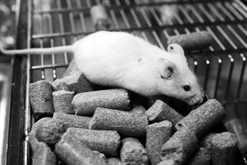 Ethics in animal testing in my opinion