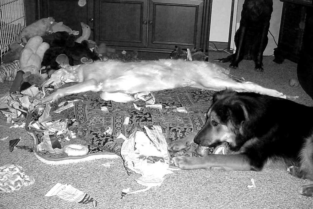 Evitare le cattive abitudini nel cucciolo di cane