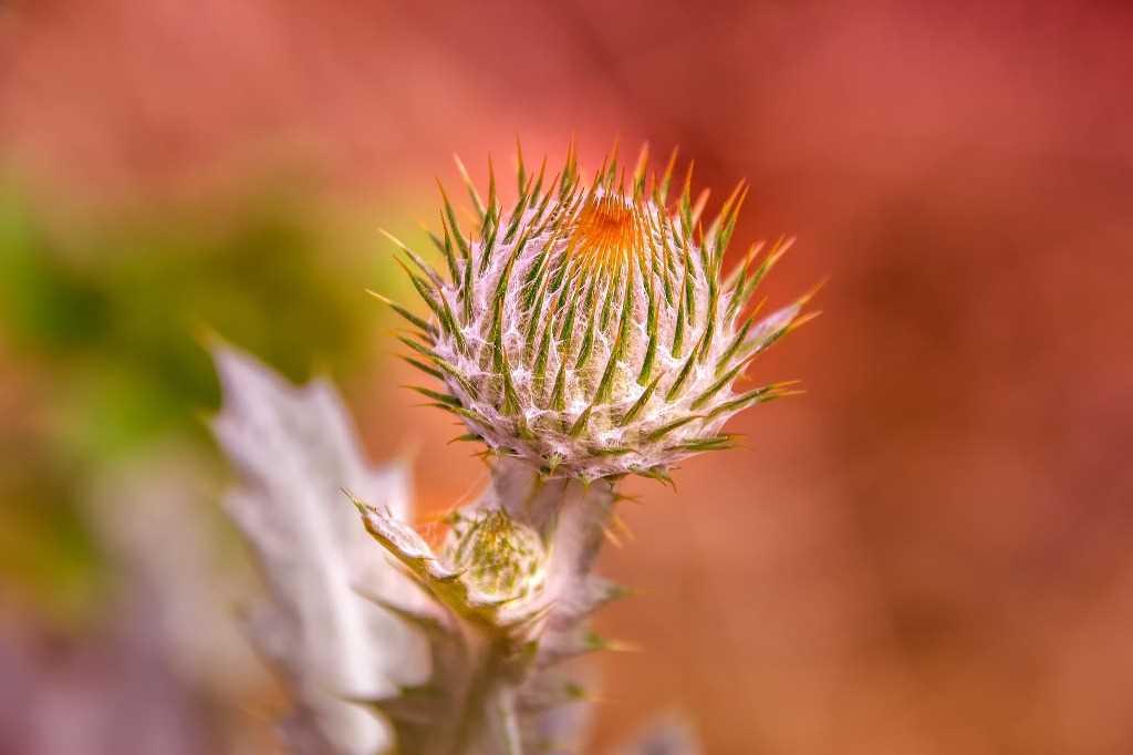 Przeznaczenie cierni u roślin