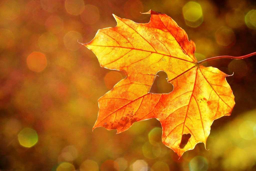Trzeci jesienny tydzień IgnisDiary