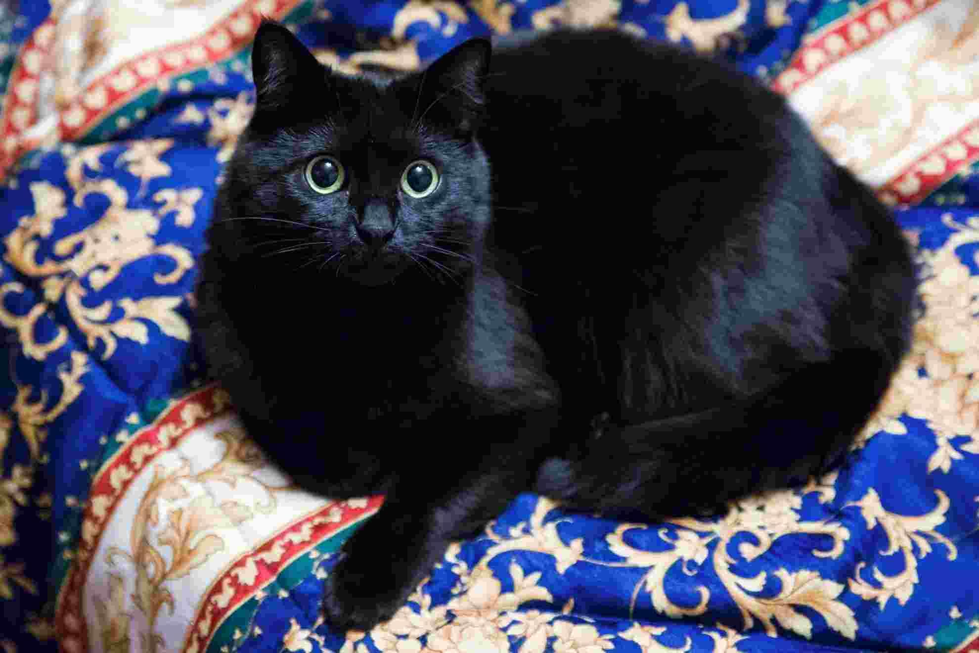 Mi gatito Cettina